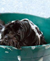 Bonnie's Mobile Pet Hydrobath